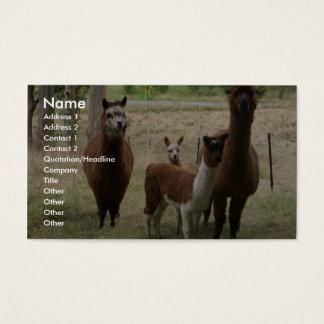 Gulliga bruna Alpacas i zooen Visitkort