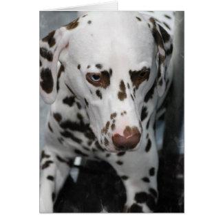 Gulliga Dalmatian hälsningkort Hälsningskort