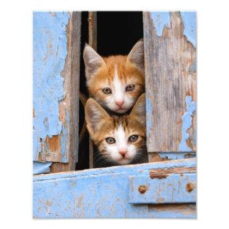Gulliga kattkattungar i blåttvintagefönstret fototryck