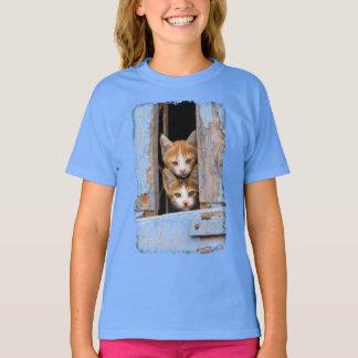 Gulliga kattkattungar i ett blåttvintagefönster - t shirts