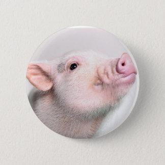 Gulliga Piggy knäppas Standard Knapp Rund 5.7 Cm