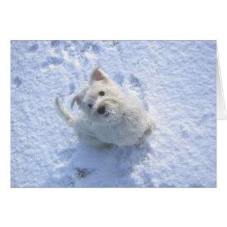 Gulliga Westie i snön Hälsningskort