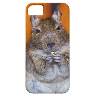 Gulligt Degu äta iPhone 5 Case-Mate Cases