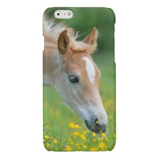 Gulligt föl för Haflinger häst