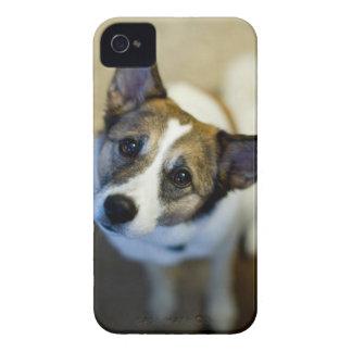 Gulligt hundblackberry boldfodral iPhone 4 fodral