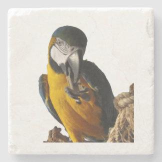 Gulligt Macawunderlägg Underlägg Sten
