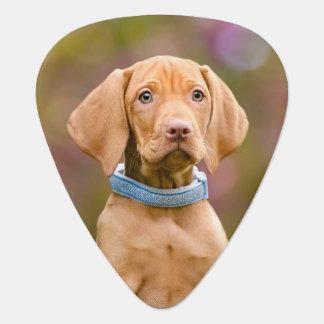 Gulligt puppyeyed ungerskt foto //för Vizsla Plektrum