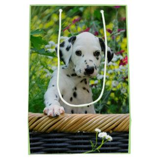 Gulligt svart prickigt Dalmatian foto för