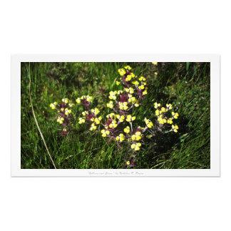 """""""Gulnar och gräs,"""" den blom- dekoren Fototryck"""