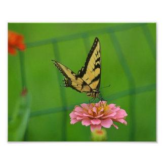 Gult fjärilsfototryck fototryck