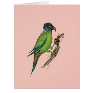 gult försedd med krage macaw, tony fernandes jumbo kort