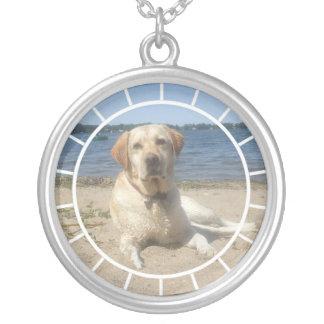 Gult halsband för hund för Labrador Retriever