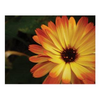 Gult och orange krukaringblomma vykort