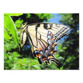 Gult Swallowtail ~-foto Fototryck