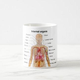Ha som huvudämne inre organ i människokroppen kaffemugg