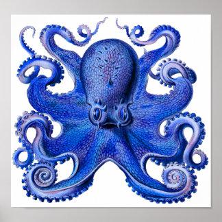 Haeckel bläckfiskblått poster