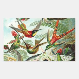 Haeckel Hummingbirds Rektangulärt Klistermärke