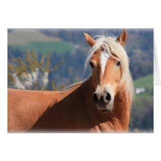 Haflinger häst hälsningskort