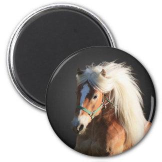 Haflinger häst magnet rund 5.7 cm