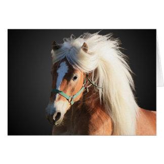 Haflinger häst med den härliga manen hälsningskort