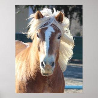 Haflinger häst poster