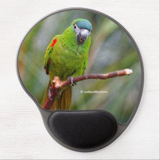 Hahns Röd-Knuffade mini- Macaw/macawen Gel Musmatta