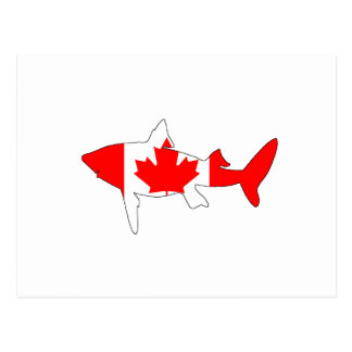 Haj Kanada Vykort