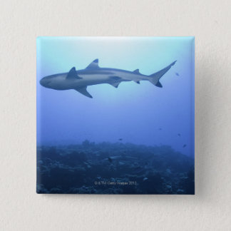 Hajen i hav, den låga vinkeln beskådar standard kanpp fyrkantig 5.1 cm