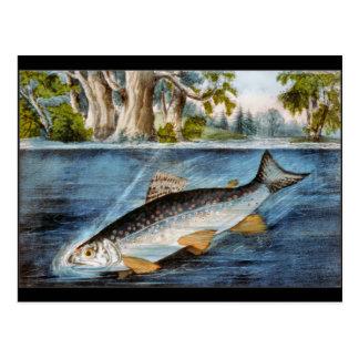 Hakad fisk vykort