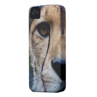 hållande ögonen på blackberry boldfodral för iPhone 4 skydd