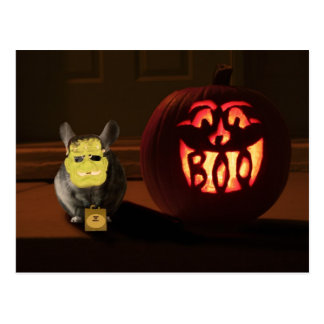 Halloween Chinchilla Vykort