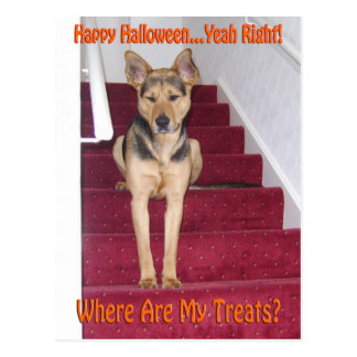Halloween hund och inga fester vykort