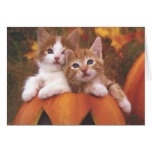 Halloween kattungekort