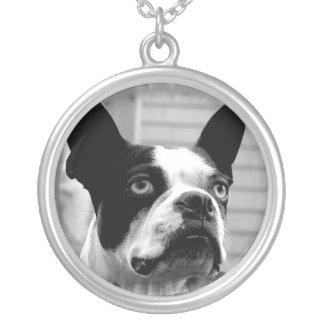 Halsband för Boston Terrierhund