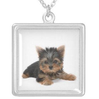 Halsband för valp för Yorkshire Terrier