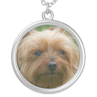 Halsband för Yorkshire Terrier