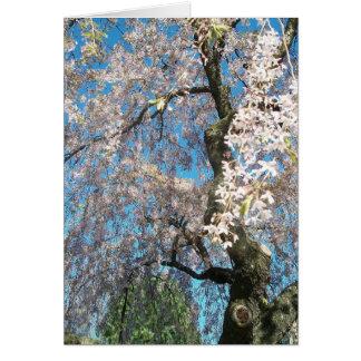 Hälsningkort med vit, foto för blommarträd hälsningskort