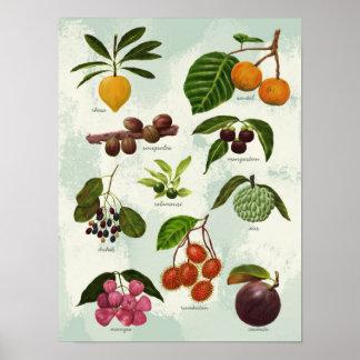 Handpainted exotiska filippinska tropiska frukter poster