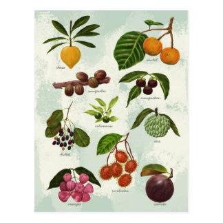 Handpainted exotiska filippinska tropiska frukter vykort