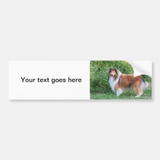 Härlig bildekal för Colliehundporträtt, gåva