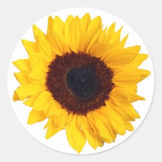 Härlig gul solros på vitklistermärke runt klistermärke