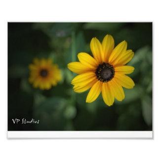 Härlig gula blommor! fototryck