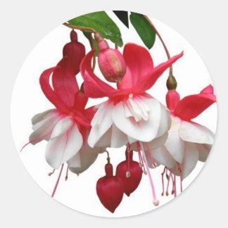 Härlig hängande fuchsia växt runt klistermärke