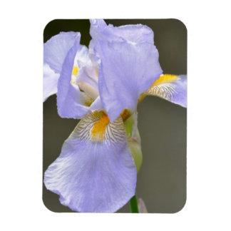 Härlig Iris Magnet
