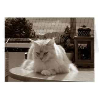 Härlig katt för vitMaine Coon Hälsningskort