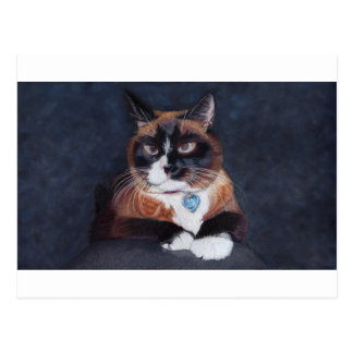 Härlig katt vykort
