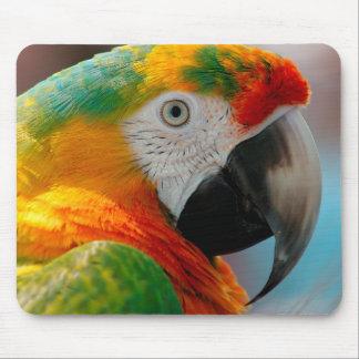 Härlig Macaw Musmatta