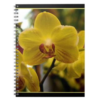 Härlig Orchidanteckningsbok Anteckningsbok Med Spiral