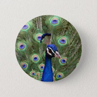 Härlig påfågel med dess öppnade färgrika svan standard knapp rund 5.7 cm