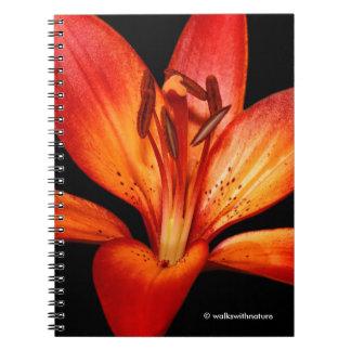 Härlig röd orange asiatisk lilja Gran Paradiso Anteckningsbok Med Spiral